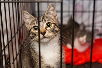 Fototapeta Little kittens in a cage of a shelter obraz