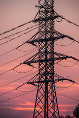 Power line with birds sitting on it and purple sunset behind