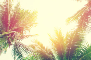 Sun over green palm leaves , vintage filtter , instragram color
