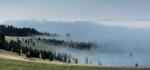 Stores à enrouleur Matin avec brouillard Foggy Landscape. Mountain ridge with clouds flowing through the pine trees.