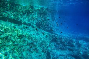 School of fish in blue water