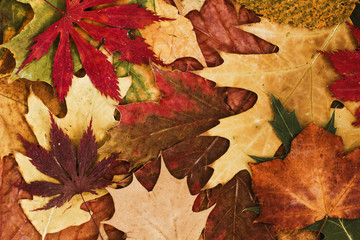 Autumn leaves background. / Autumn leaves background.