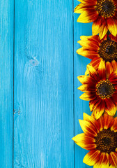 Sunflowers on boards