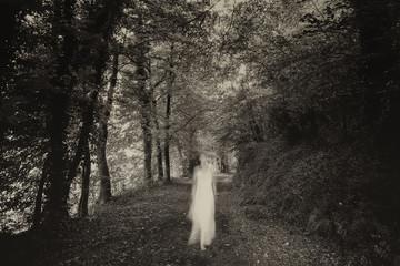 Fototapeta White dame in the forest obraz