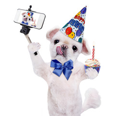 Birthday dog taking a selfie together with a smartphone. Isolated on white.