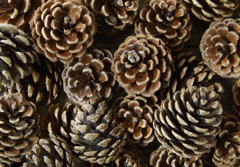 A full page of pine cone background texture