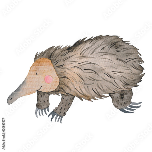 Echidna Australian animals watercolor Hand-painted