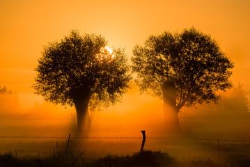Obraz Świt nad łąkami - fototapety do salonu
