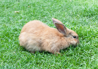 Little domestic rabbit on a green grass