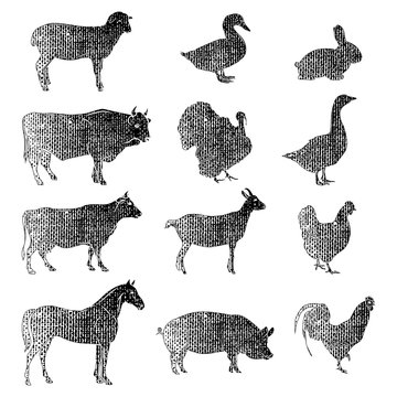 Meat symbols. Hand drawn farm animals. Vintage vector illustration