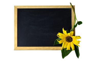 Sunflower and empty blackboard