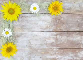 Sunflower Daisy Moss Border on wood background with copy space.