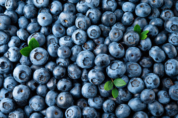 Blueberry. Fresh organic berries macro. Fruit background