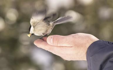 Piccolo uccello selvatico prende il volo dalla mano di un uomo