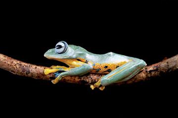 Tree frog, alone, in the dark