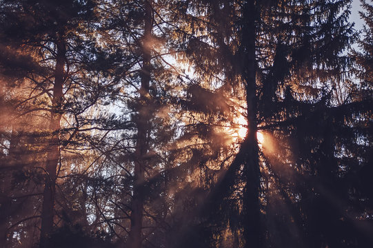 sunlight streaming through the trees branches in the forest