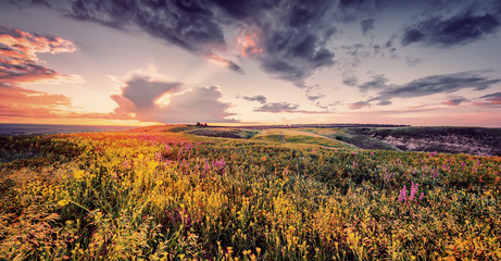 beautiful spring or summer filed with flowers on sunset, natural background