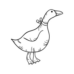 duck animal with collar. side view. drawn design vector illustration