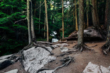 Forest, Glacier National Park, Montana, Canada, United States of America
