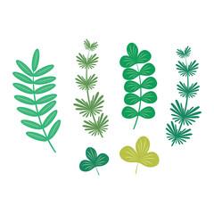 Seaweed vector illustration leaf