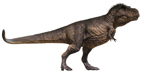 3D rendering of Tyrannosaurus Rex standing tall, isolated on white background.