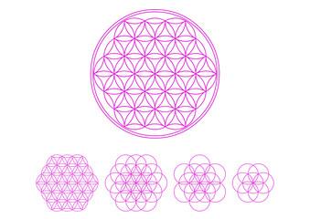 Blume des Lebens - Heilige Geometrie - Vektor Pink - Set