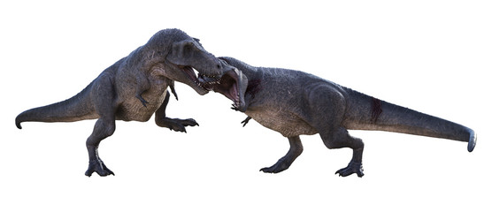 3D render of a Tyrannosaurus Rex biting the head of a contender, isolated on a white background.