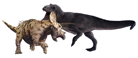 3D rendering of Tyrannosaurus Rex facing off against Triceratops horridus, isolated on a white background.