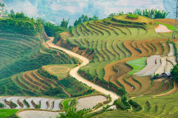 Beautiful terraced rice field in Lao cai province in Vietnam