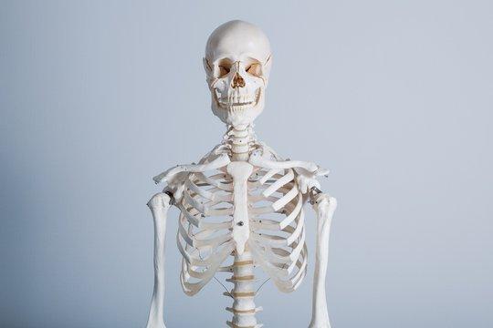 White human body bone frame on white background
