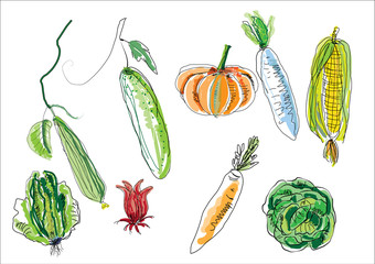 vegetable the winner concept for symbols .isolated hand drawing picture line art vegetable on white background for health concept