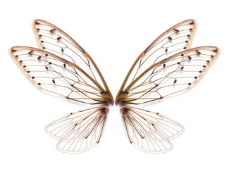 Insect cicada wing  isolated on white background Wall mural
