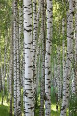Tuinposter summer in birch forest