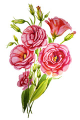 A beautiful artistic white and purple branch of lisianthus, eustoma flowers on white background