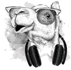 The image of the camel in the glasses, headphones and in hip-hop hat. Vector illustration.