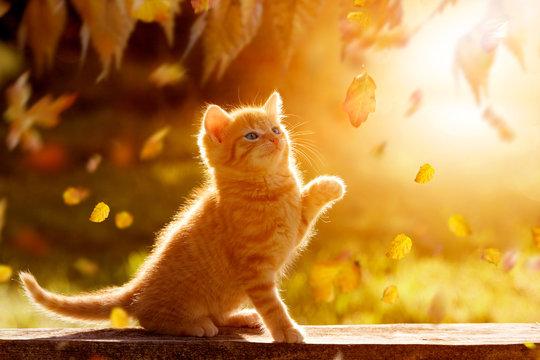 junges Kätzchen im Herbst