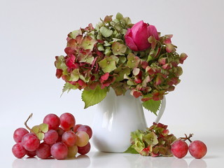 Autumn still life with bouquet of hydrangea flowers and garden roses in a vase and pink grapes. Home decoration with green hortensia flowers, pink roses and grapes.