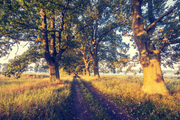 Beautiful oak alley, a natural monument