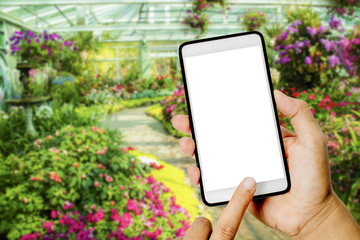 Hand hold empty smartphone in flower garden.you can show something on empty smartphone.