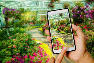 Hand hold smartphone in flower garden.you can show somsing on empty smartphone.