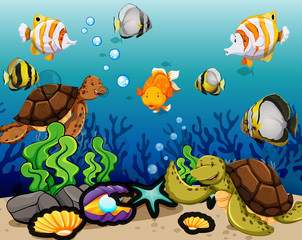 Many sea animals swimming underwater