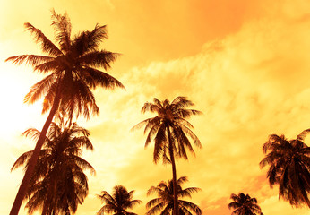 Palm tree and sky for background