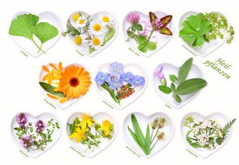 Alternativmedizin mit Heilpflanzen 1