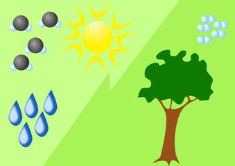 Photosynthesis cartoon diagram