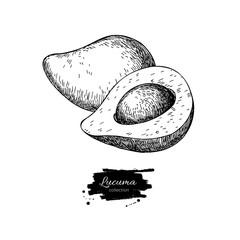 Lucuma vector superfood drawing. Isolated hand drawn  illustrati