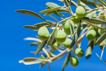 Wall Mural - Olives