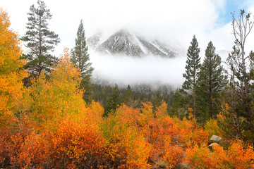 Autumn trees on the way to North lake in California