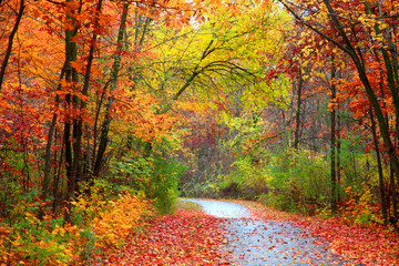 Aluminium Prints Orange Glow Beautiful alBeautiful alley in colorful autumn timeley in colorful autumn time