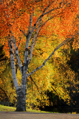 Close up shot of bright autumn trees
