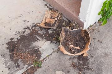 Flower pots broken flower Old derelict fracture